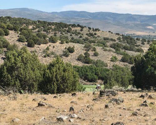 2762 E. Boulder Top Loop