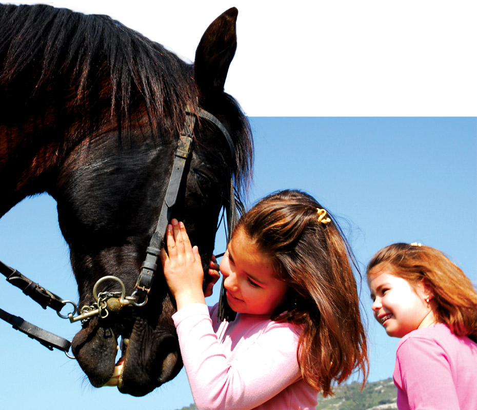 Horseback Riding Lessons and Horsemanship 101