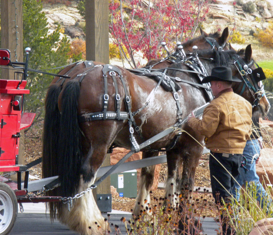 Sleigh Rides Near Park City Utah